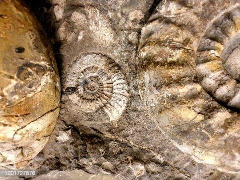 istock Ammonite fossil 1201727876