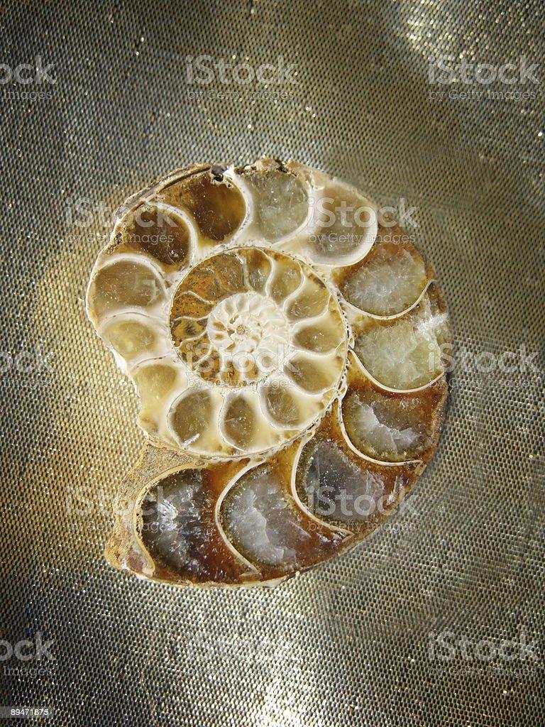 Ammonite Fossil royalty-free stock photo