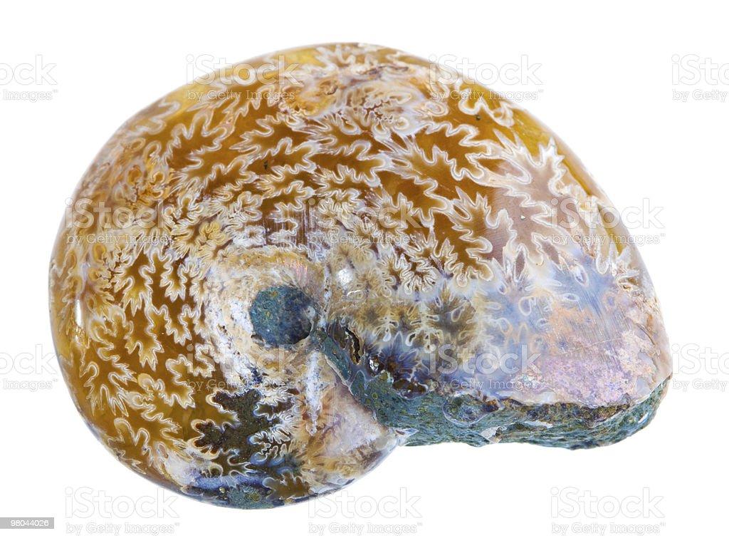 암모나이트 화석 royalty-free 스톡 사진