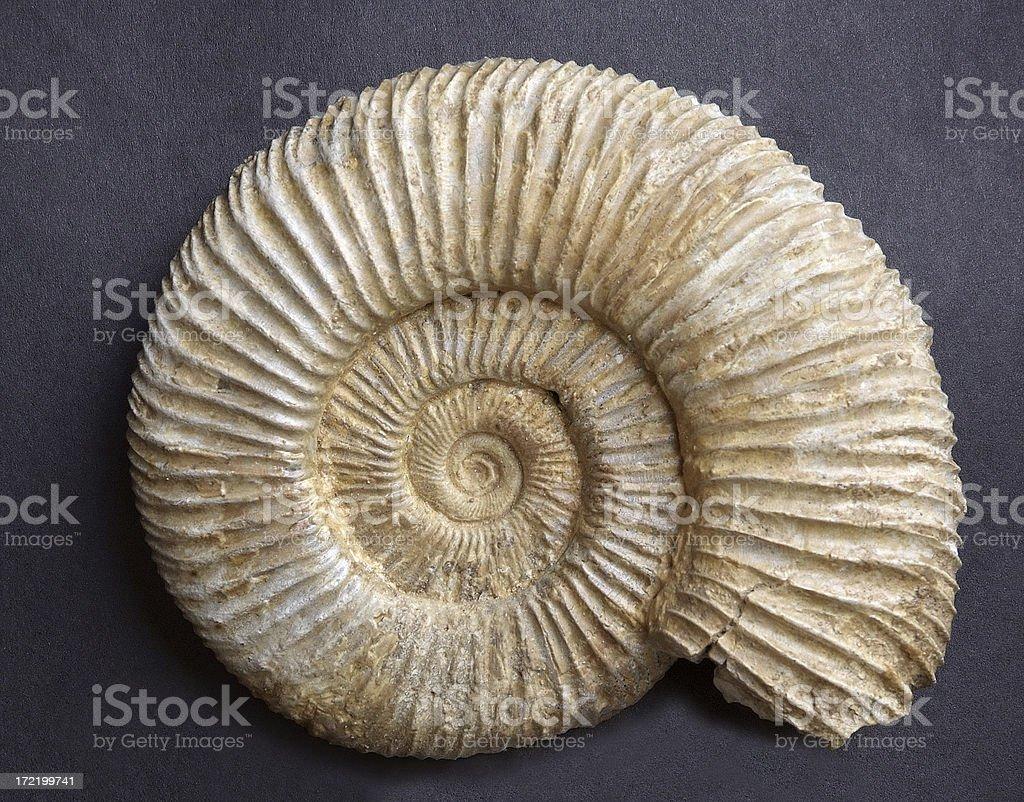 Ammonit von der Jurassic – Foto