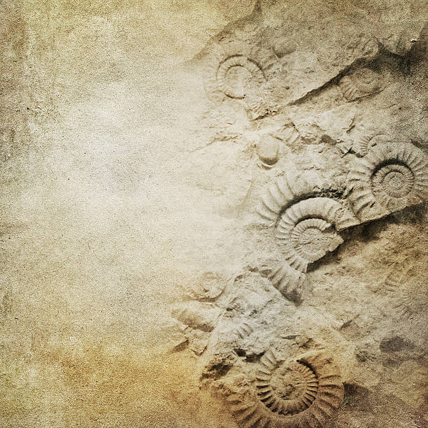 ammonite on brown paper background - fossil stock photos and pictures