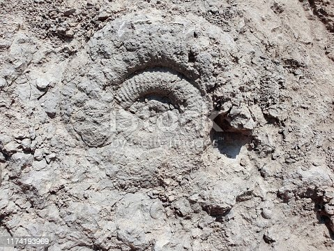Ammonite fossil found at limestone in the jurrasic geology (canton of aargau).