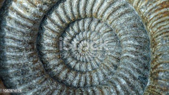 istock Ammonite Spiral 1052974174