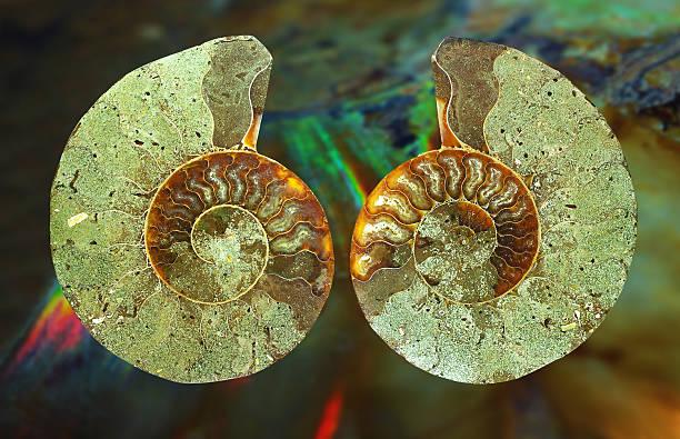 Ammonit mit iridescence (Ammolite) im Hintergrund – Foto