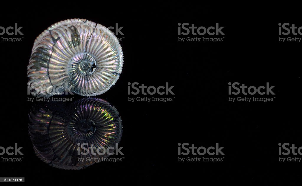 Ammonite with Iridescent Surface – Foto