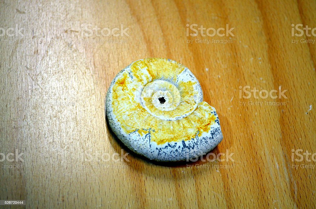 Ammonites fossil snail cut well preserved, colorful stock photo