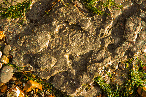 Ammonites In Rock Stock Photo - Download Image Now