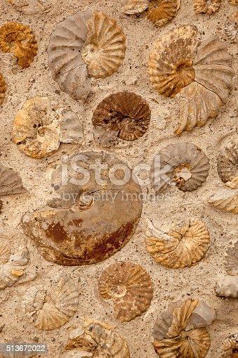 istock Ammonites 513672022