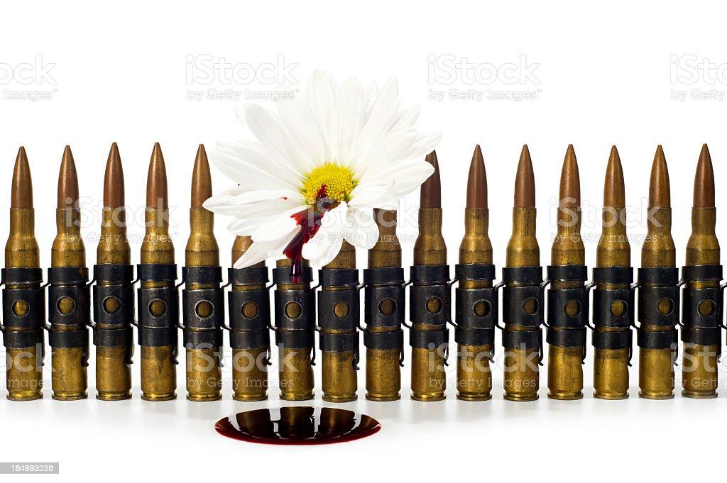 Ammunition - Bleeding Daisy royalty-free stock photo