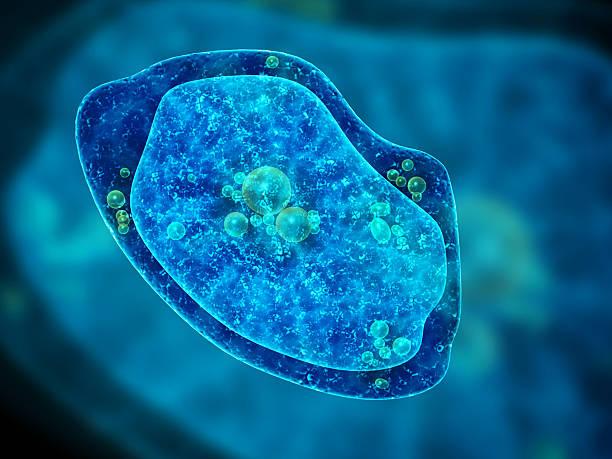 ameba sobre fundo azul - amiba imagens e fotografias de stock
