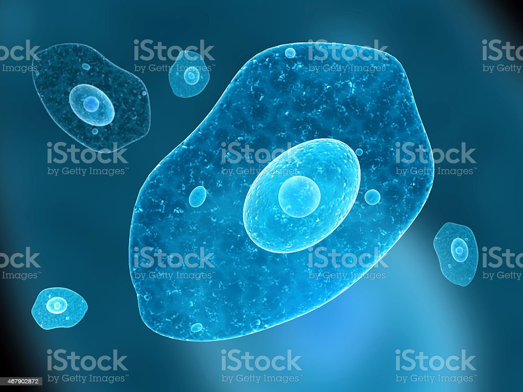 Amoeba stock photo