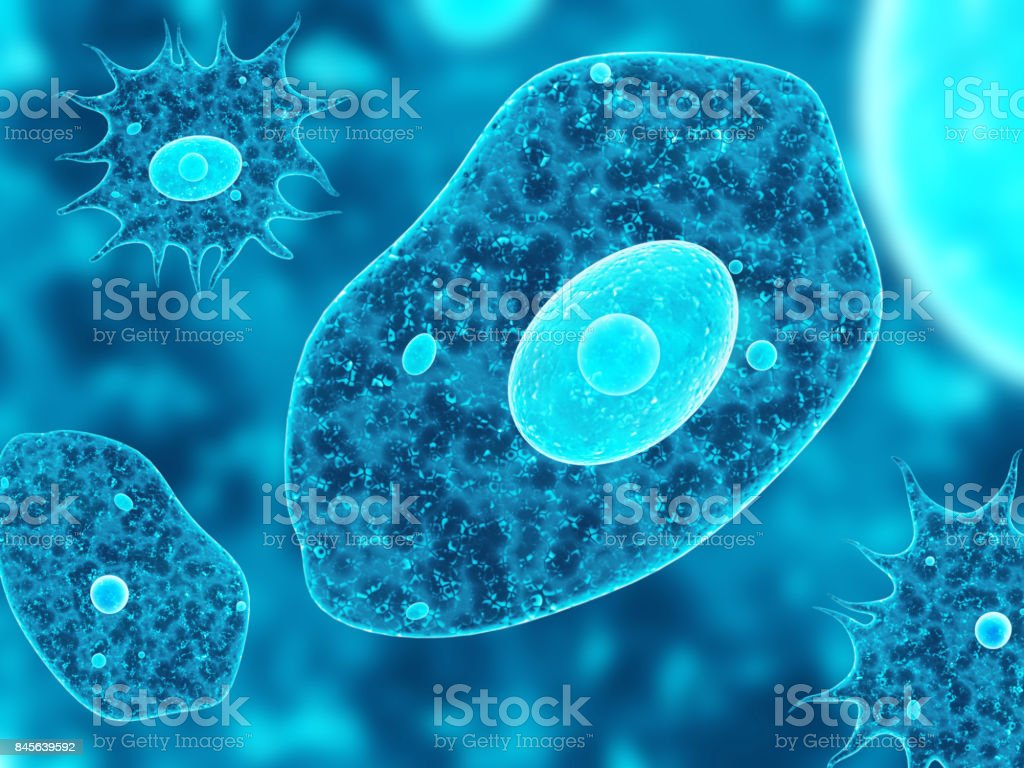 Amoebas on abstract blue background – zdjęcie
