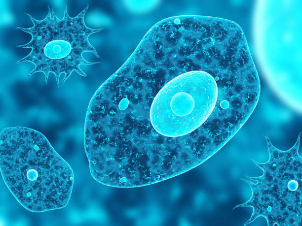 Amoebas on abstract blue background Amoebas on abstract blue background. 3d render prokaryote stock pictures, royalty-free photos & images