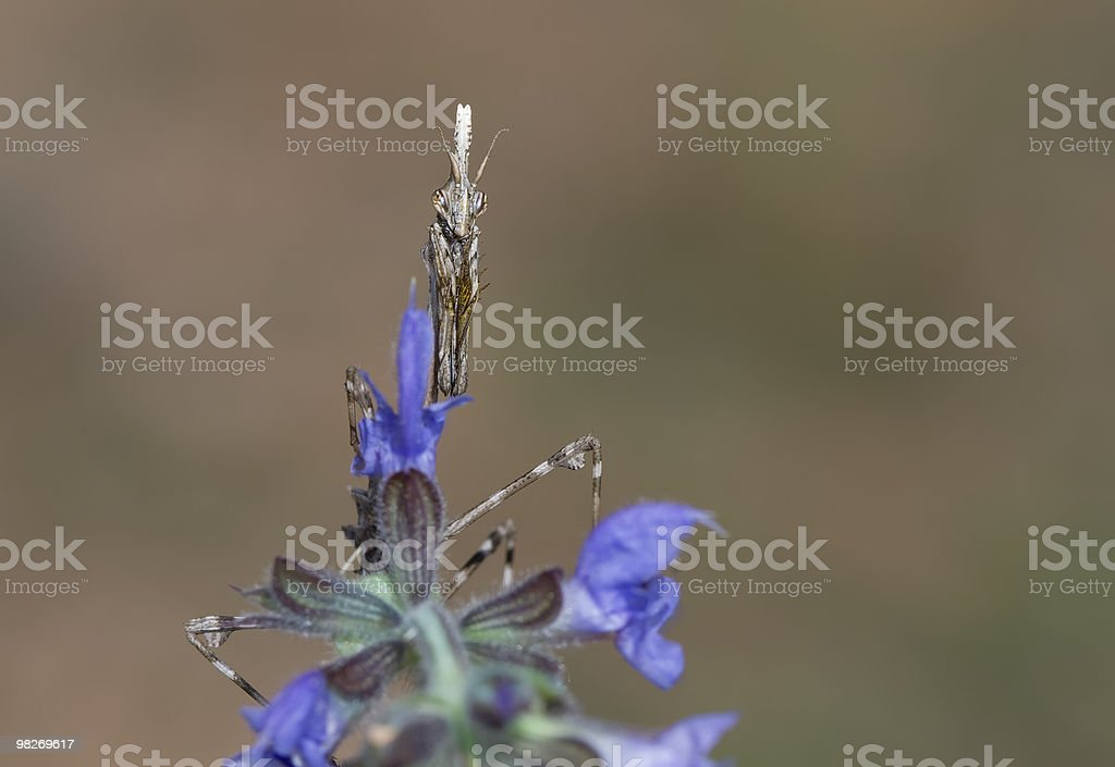 ... among the flowers ... royalty-free stock photo