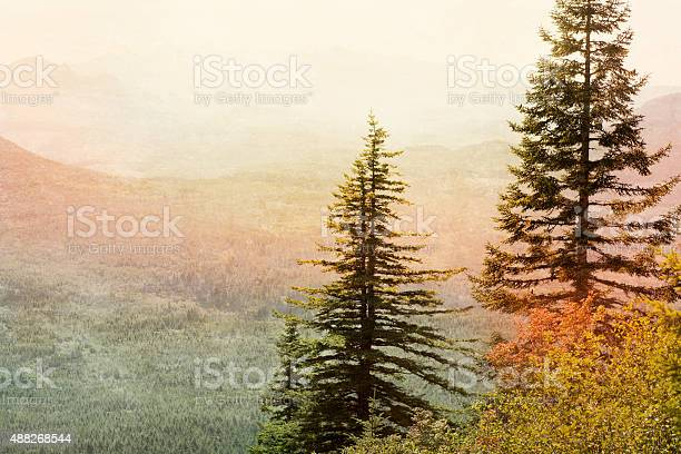 Among The Trees Stock Photo - Download Image Now