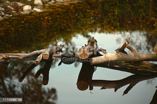 View of a tranquil scene of Amphibian life: Autumn in the Lake