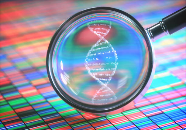 Amplifying DNA Helix 3D illustration. DNA Sanger Sequencing and a Magnifying Glass Showing the DNA Helix. helix model stock pictures, royalty-free photos & images