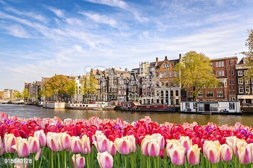 istock Amsterdam city skyline at canal waterfront with spring tulip flower, Amsterdam, Netherlands 918640178