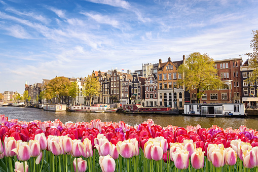 Amsterdam City Skyline At Canal Waterfront With Spring Tulip Flower Amsterdam Netherlands Stock Photo - Download Image Now