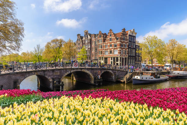 Amsterdam city skyline at canal waterfront with spring tulip flower, Amsterdam, Netherlands