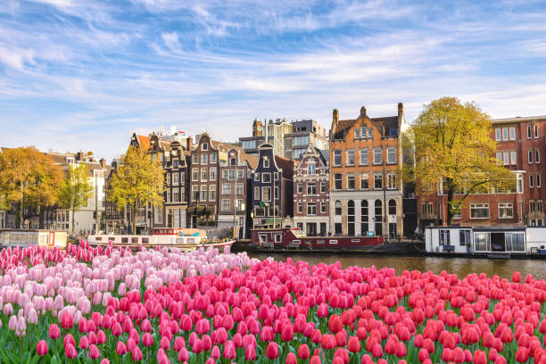 Amsterdam Netherlands, city skyline Dutch house at canal waterfront with spring tulip flower stock photo