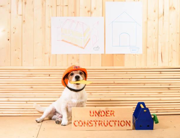 """amüsante baumeister in bauarbeiterhelm auf baustelle neben dem balken mit label """"under construction"""" - hundezubehör diy stock-fotos und bilder"""