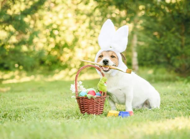amüsante hund mit kaninchen ohren gemacht geschenkkorb mit traditionellen ostersymbolen - hundezubehör diy stock-fotos und bilder