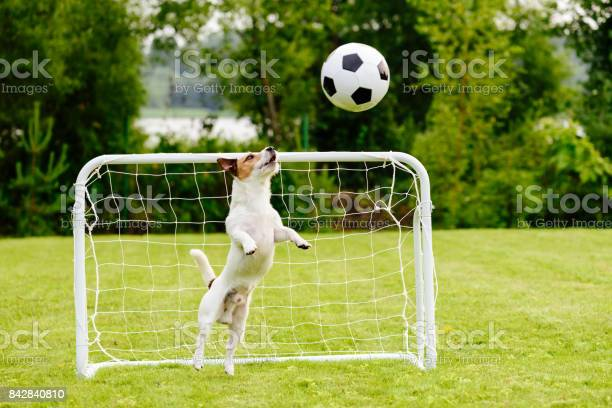 Amusing goalie catching generic football ball saving goal picture id842840810?b=1&k=6&m=842840810&s=612x612&h=cenb0wpz760h8by87e6otl82m 9hjpdtq78vsjwneja=