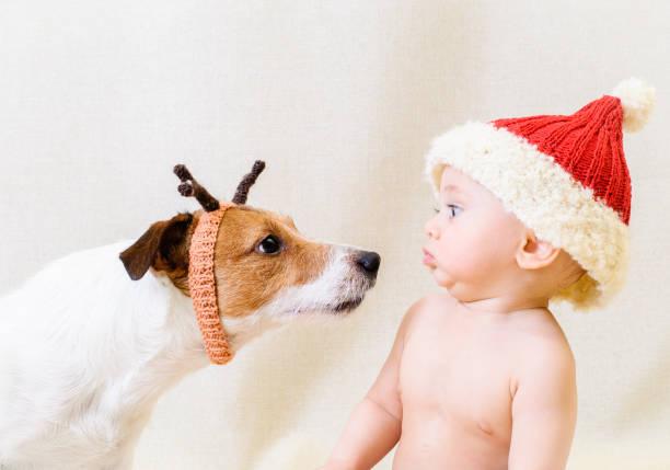 lustige weihnachtsmann trifft lustige rentiere. konzept für 2018 jahr der gelben erde-hund - nikolaus kostüm stock-fotos und bilder
