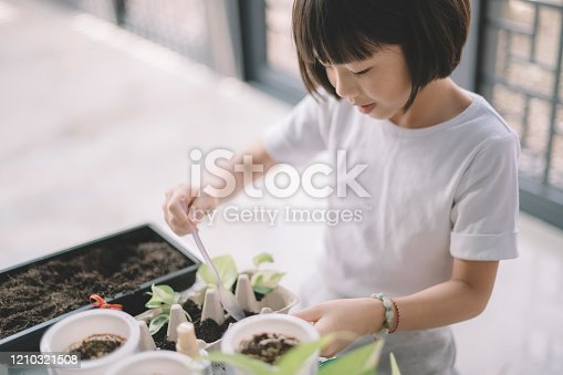 an 8 years old chinese gilr tending and potting plant at home during weekend leisure