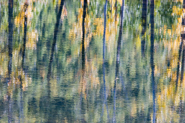 an abstract design created by foliage reflecting on water - impressionist painting stock photos and pictures
