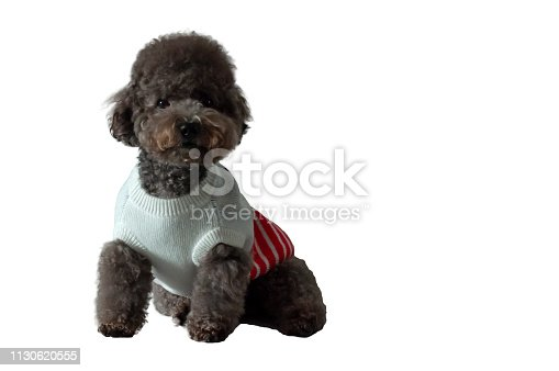 533229488 istock photo An adorable black toy Poodle dog with his dress. 1130620555