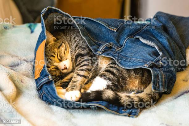 An adorable kitten sleeping in someones blue jeans on a bed picture id910538634?b=1&k=6&m=910538634&s=612x612&h=u1dsmhws50uihayabnznygyhqgwxvu9owph1qtcspng=