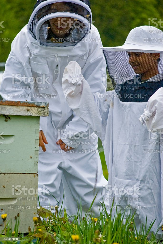 An adult teaching a child about bee keeping stock photo