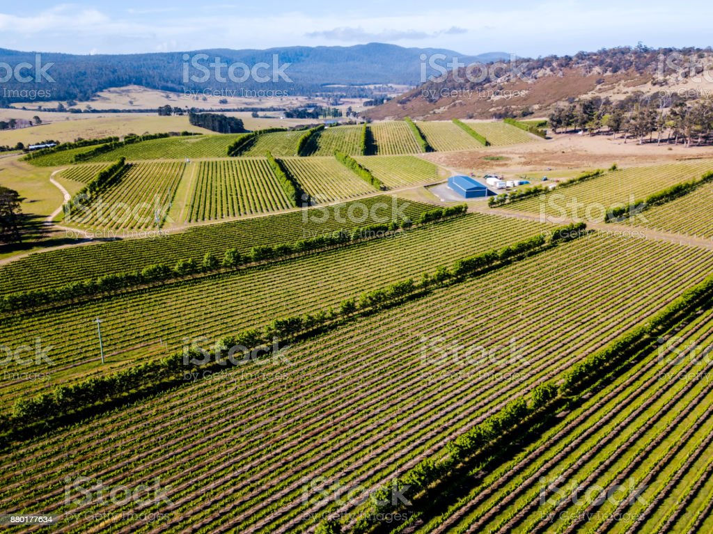 An aerial view of vineyards at a winery stock photo