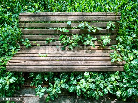An aged wooden street bench  surrounded by the beautiful  houseplants,Pilea cadierei,  in a shady corner of  small street park, Fuzhou,Fujian,China.