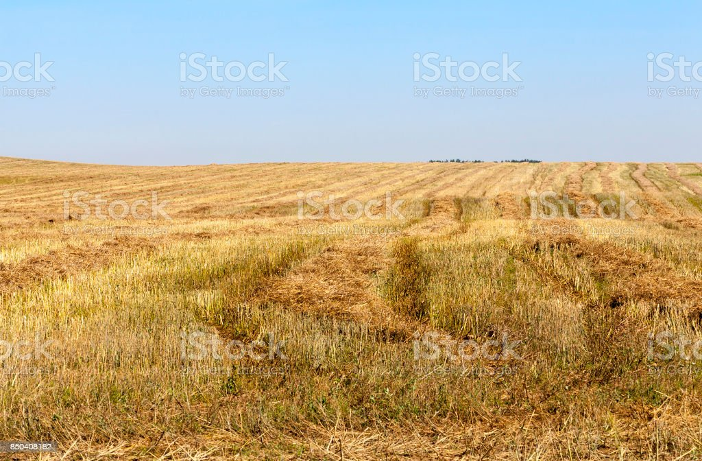 an agricultural field stock photo