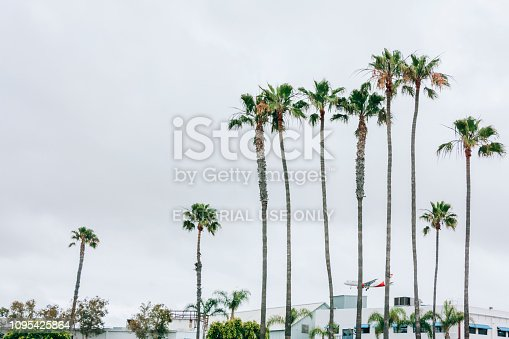 San Diego, CA, USA - May 30, 2016: An airplane landing behind palm trees in San Diego