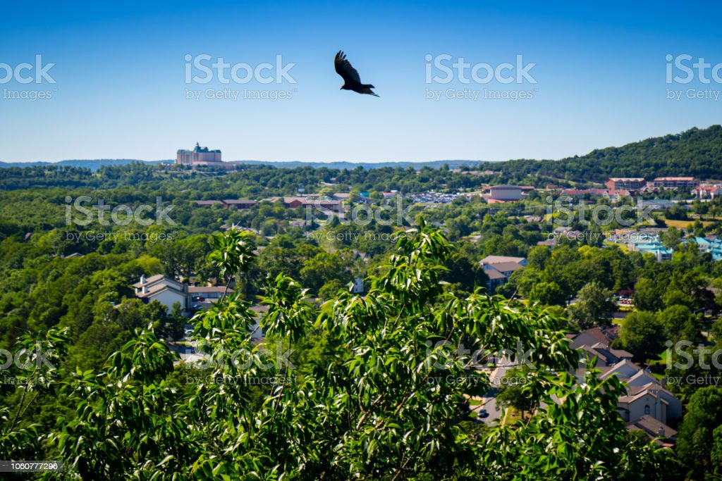 An American Crow in Branson at Southwest Missouri stock photo