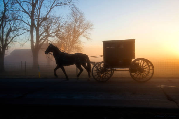 an amish buggy in profile and in silhouette in the morning fog - cocchio foto e immagini stock