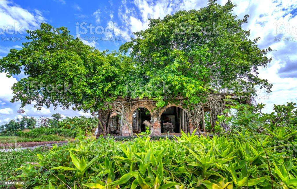 Un templo antiguo lleno de raíces pegarse Bodhi soportar en el tiempo - foto de stock