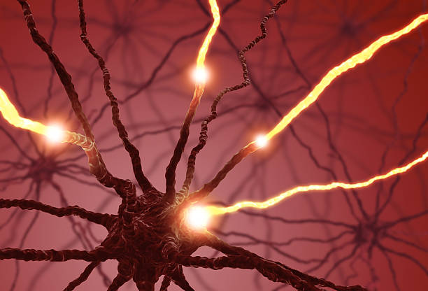 An animation of a nerve cell pulsing Interconnected neurons transferring information with electrical pulses. autoreceptor stock pictures, royalty-free photos & images