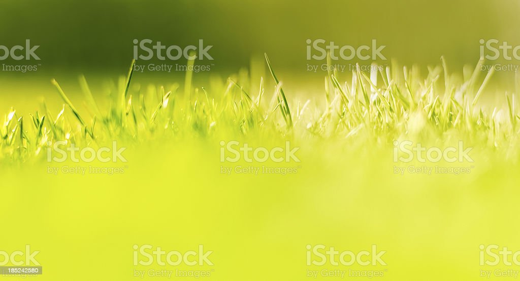 An ant's view of the grass royalty-free stock photo