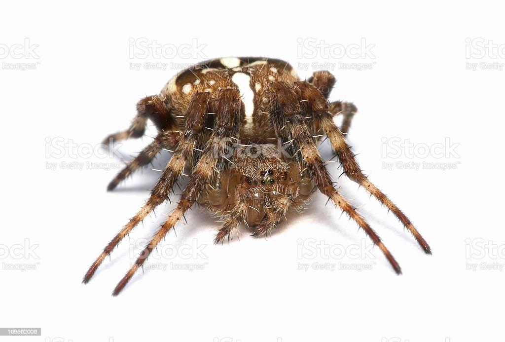 An arachnid up close royalty-free stock photo