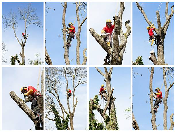 an arborist cutting a tree with a chainsaw - tree surgeon stock photos and pictures