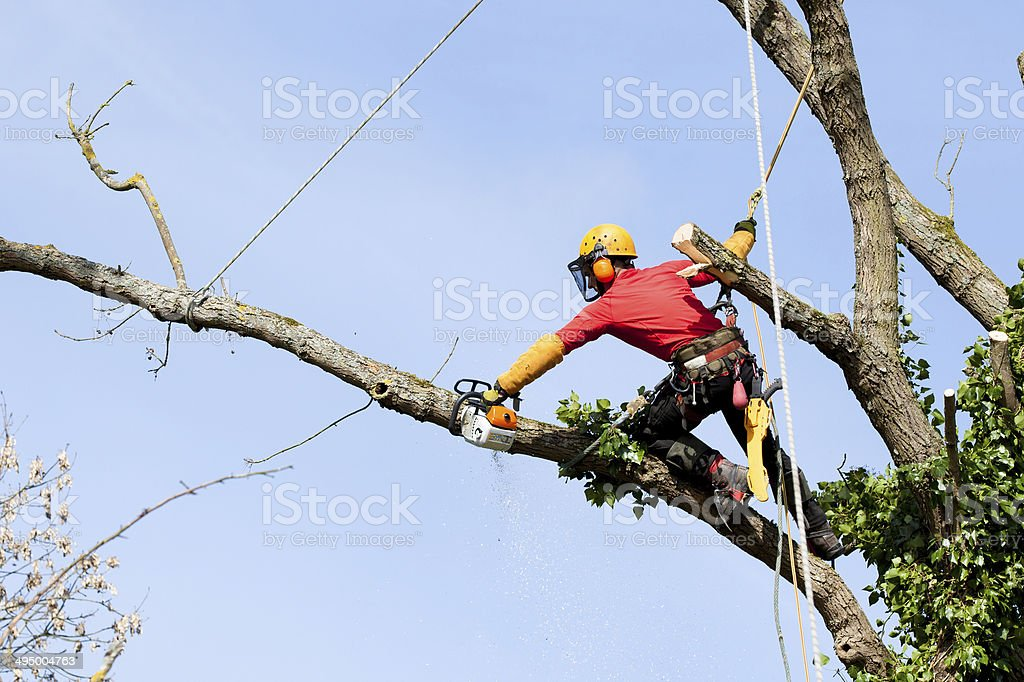 An arborist cutting a tree with a chainsaw stock photo