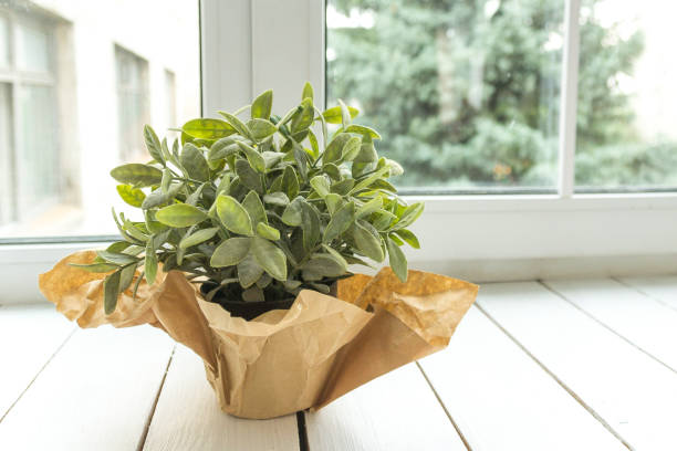 An artificial flower in a pot decorated with brown paper on a light window sill. Flower for office concept. stock photo