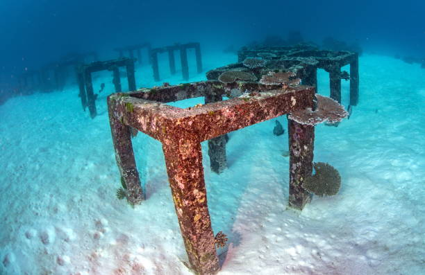 an artificial reef is a man-made underwater structure, typically built to promote marine life - artificial reef stock pictures, royalty-free photos & images