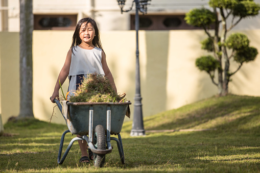 An Asia Chinese girl is smiling and carrying grass in wheelbarrow