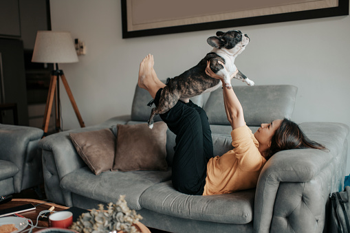 an asian chinese beautiful woman pet owner bonding time with her pet french bulldog on sofa